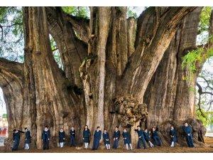 Dünyanın 'en' ağaçları…