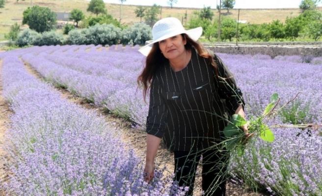 56 yaşındaki kadın önce hayalini kurdu, sonra lavanta bahçesini oluşturdu
