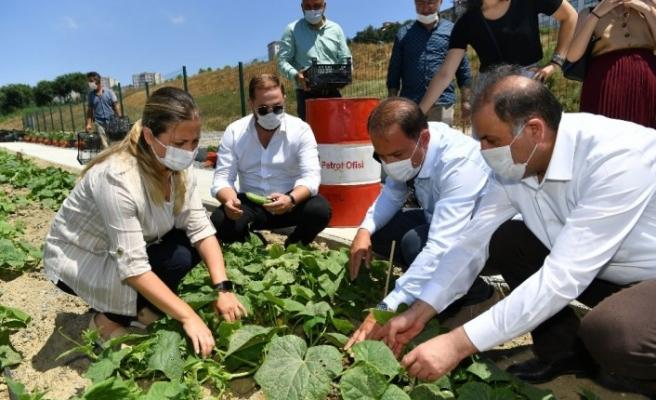 Başkan Çalık Yaşam Bahçesi'nin mahsullerini topladı