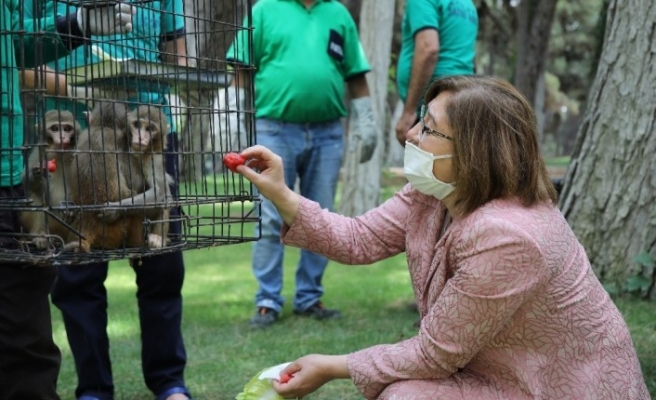 Down sendromlu maymun koruma altında