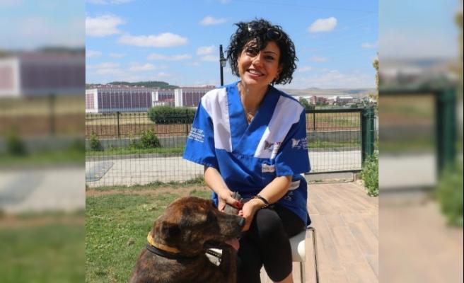 Havai fişek gösterilerinin Sivas'ta da yasaklanması için başvuruda bulunuldu
