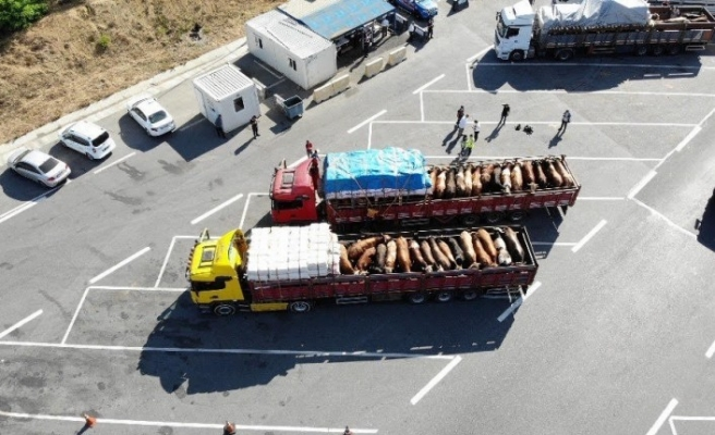 İstanbul'a gelen kurbanlıkların denetimleri havadan görüntülendi