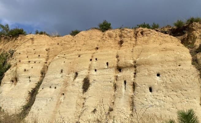 Kum tepeleri kırlangıçların yuvaları oldu