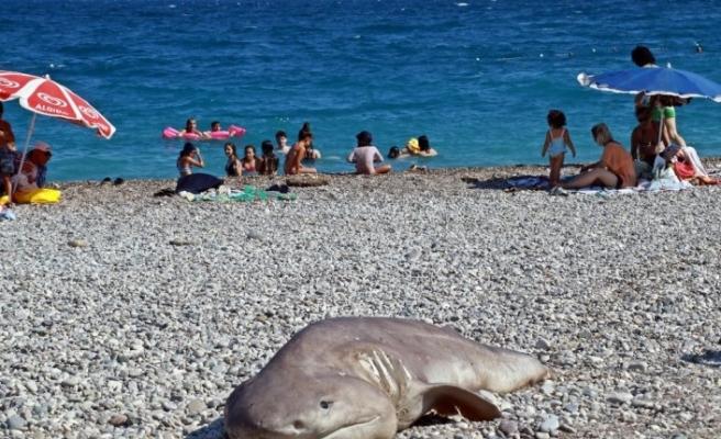 Olta ile avlanan  ölü köpek balığı sahile vurdu