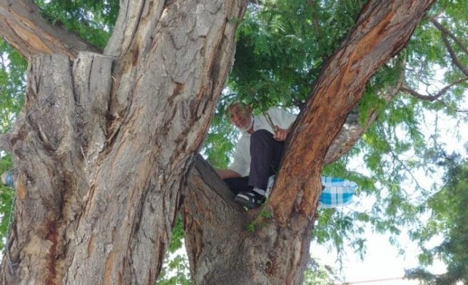 Oturacak yer bulamayan adam ağaca çıktı