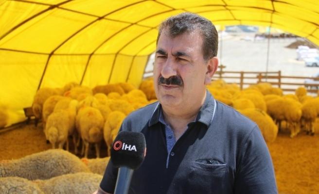 """TÜDKİYEB Genel Başkanı Çelik: """"Şuan da stoklarımızda 5 milyon küçükbaş hayvan müşterisini bekliyor"""""""