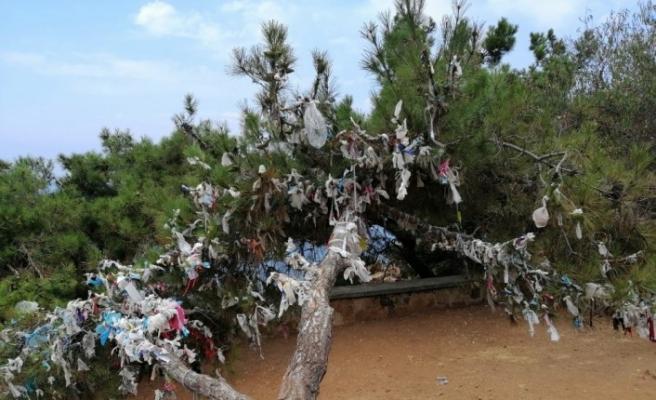 Ağaçlara dilek çaputu yerine maske bağladılar