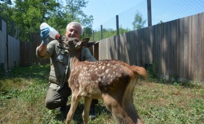 Bu merkez doğadaki yardıma muhtaç hayvanlara kucak açıyor