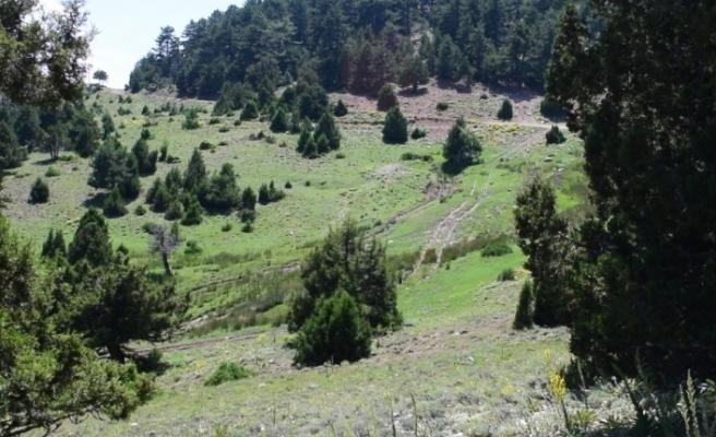 Denizli'nin Tavas ilçesinde 9,16 hektarlık alan koruma altına alındı