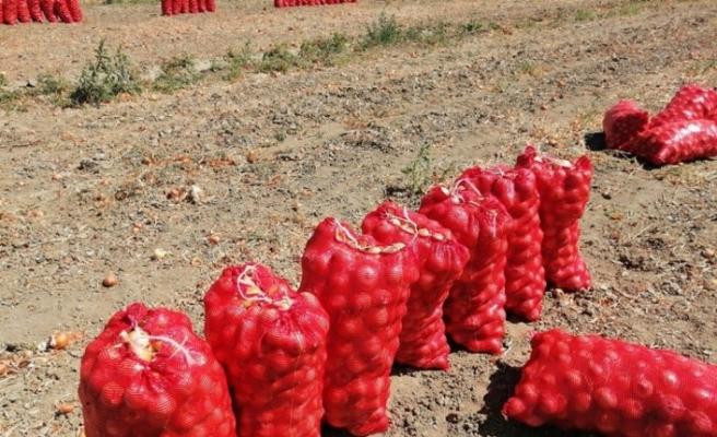 Korona virüs soğan üreticisini etkiledi, fiyatlar kırık başladı