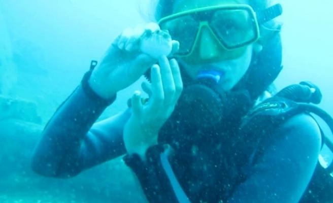 Saldırganlığıyla bilinen balon balığını su altında sevip beslediler