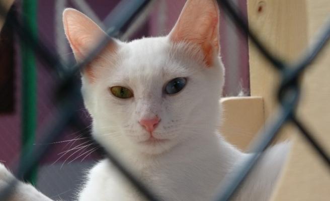Van kedilerine sosyal mesafeli sevgi