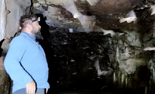 3 bin yıllık kaya mezarlarında yaşamlarını sürdüren yarasalar koruma altına alındı