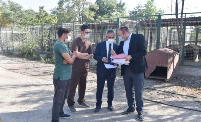 Başkent'te barınaklarda iyileştirme çalışmaları devam ediyor