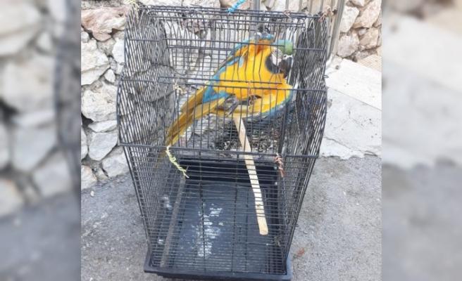 CITES belgesi olmayan papağanlar ve iguanaya el konuldu
