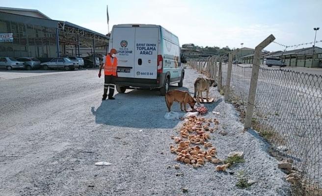Hem ekmek israfı önleniyor hem de hayvanlar aç kalmıyor