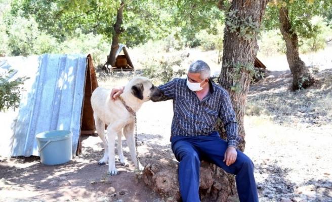 Konya'da köpeklere şefkatli ve huzurlu yuva