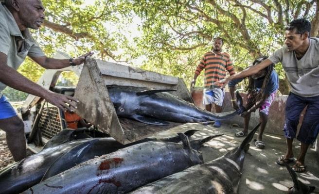 """Mauritius Balıkçılık Bakanlığı: """"Şu ana kadar 38 yunus ölü bulundu"""""""