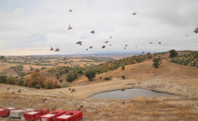 Nesli tükenmekte olan 600 keklik doğaya salındı
