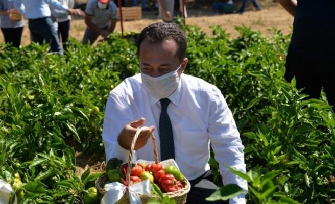 Osmanlı'dan miras 'Kamber' biberinin hasadı başladı