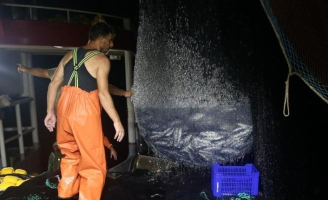 (Özel) Karadeniz'de palamut bereketi