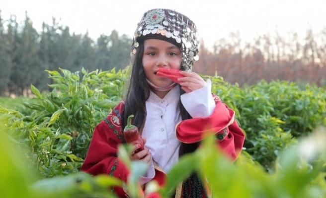 Şanlıurfa'da isot hasadı programı düzenlendi