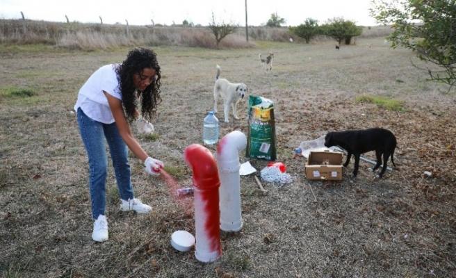 THY'nin gönüllü kabin memurundan sokak hayvanlarına yardım eli