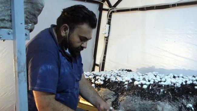 Ürettiği mantarlardan 45 günde bir, 20 bin TL kazanıyor