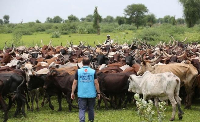 520 bin kişiye adak, akika ve şükür kurbanı eti ulaştırıldı