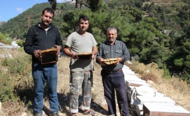 Arı kovanlarının içerisindeki esrarengiz olaylar arıcıları şaşırttı