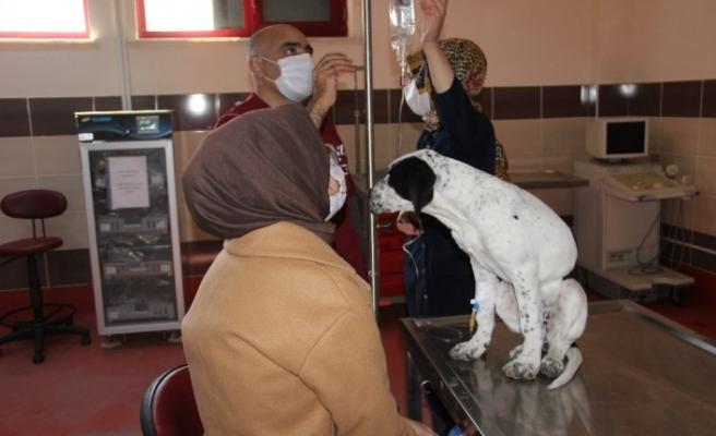 Atatürk Üniversitesi bünyesinde hizmet veren Hayvan Hastanesi hasta hayvanlar için umut oluyor