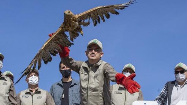 Bakan Pakdemirli rehabilite edilen yaban hayvanlarını doğaya bıraktı