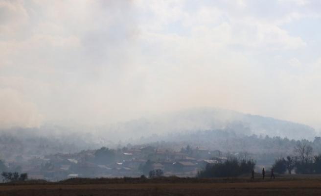 Bolu'da yangında zarar gören 40 hektarlık alan ağaçlandırılacak