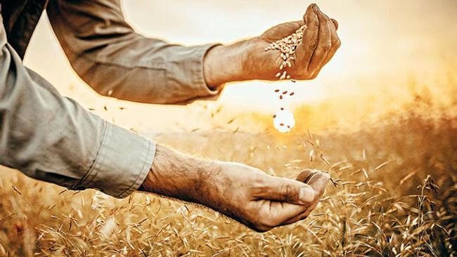 Buğday, arpa, mısırda ithalatın önü açıldı