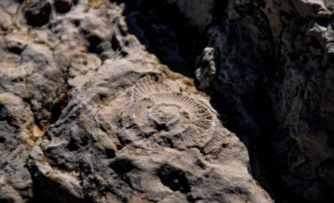 Eskişehir'de 65-200 milyon yıllık Ammonit fosilleri keşfedildi