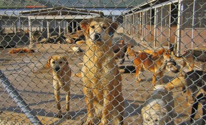 Hayvan Hakları Günü'nde hayvana şiddet hala kabahat