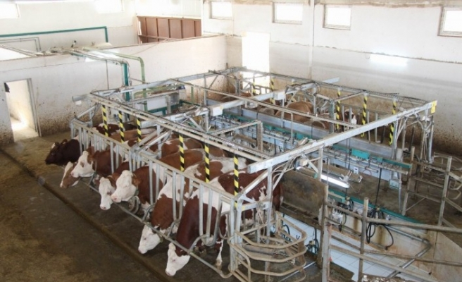 Hollanda'da yaşayan gurbetçi vatandaş tarım ve hayvancılık için Türkiye'ye döndü