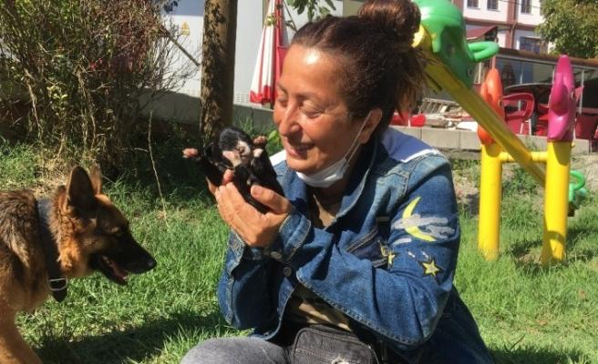 Ölü doğan köpek yavrularını suni teneffüsle hayata döndürdü