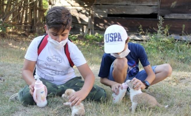 Oyun oynarken buldukları yavru köpekleri harçlıklarıyla süt alarak besliyorlar