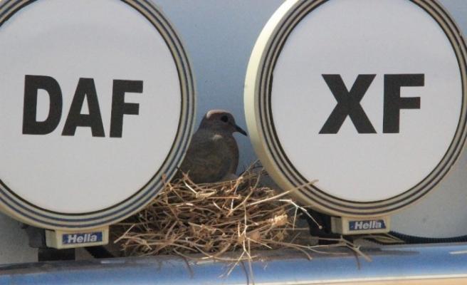 (Özel) Kuşun yuva yaptığı tır seferden çekildi