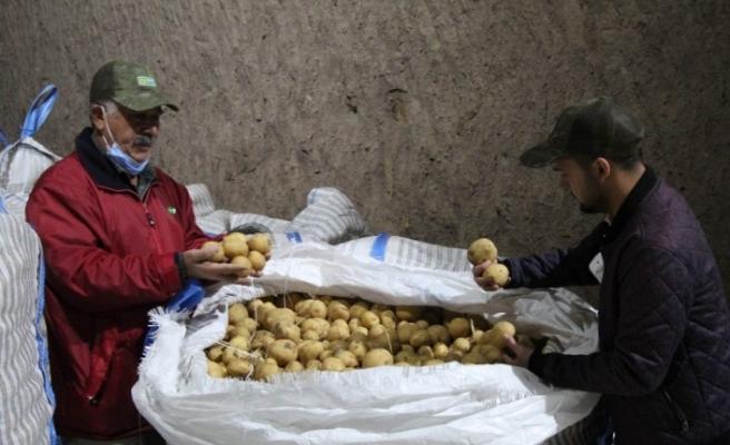 (Özel) Yerli patates tohumu ile ithalatın önüne geçilecek