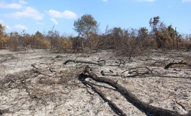 Samsun'da ormanlarda çıkan 41 yangında 64,75 hektar alan zarar gördü