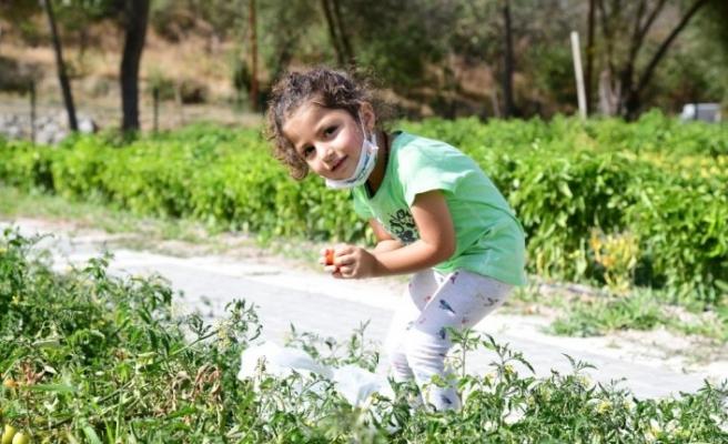 Üreğil Millet Bahçesi tarım alanı halka açıldı