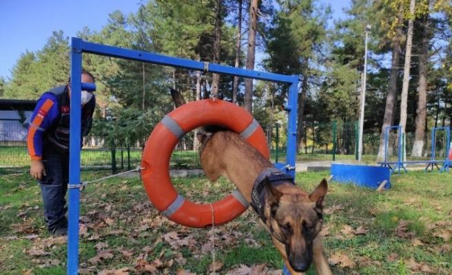 AFAD'ın altın burunlu kahraman köpekleri böyle eğitiliyor