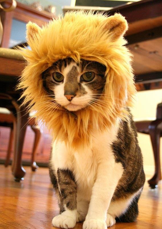 aslan kedi rangers twitter