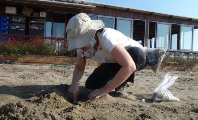 Belek ve Patara'da kum zambağını popülasyonu S.O.S. veriyor