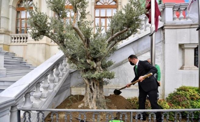 Beyoğlu'ndan tüm İstanbul'a yayılan 'Zeytin Ağacı Dikme' kampanyası