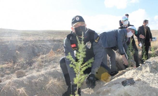 Çankırı'da 73 bin fidan toprakla buluşturuldu