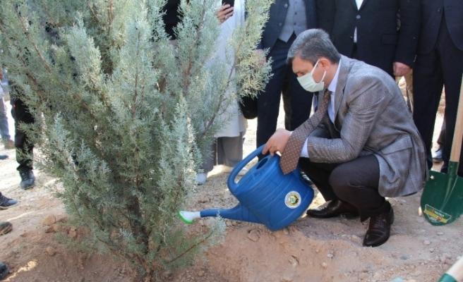 Hasankeyf'e 14 bin ağaç toprakla buluştu