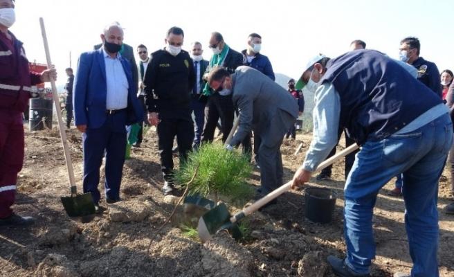 Küle dönen 200 hektarlık alanda ilk fidanlar dikildi